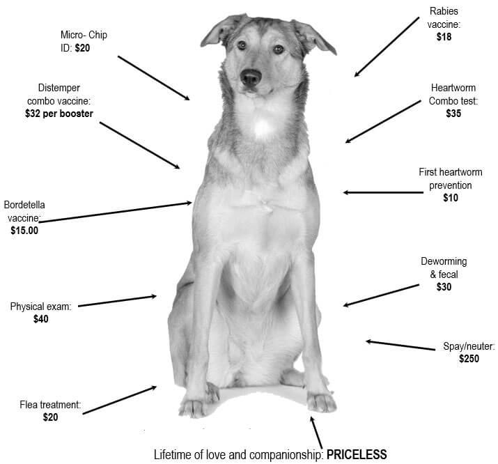 dog-priceless